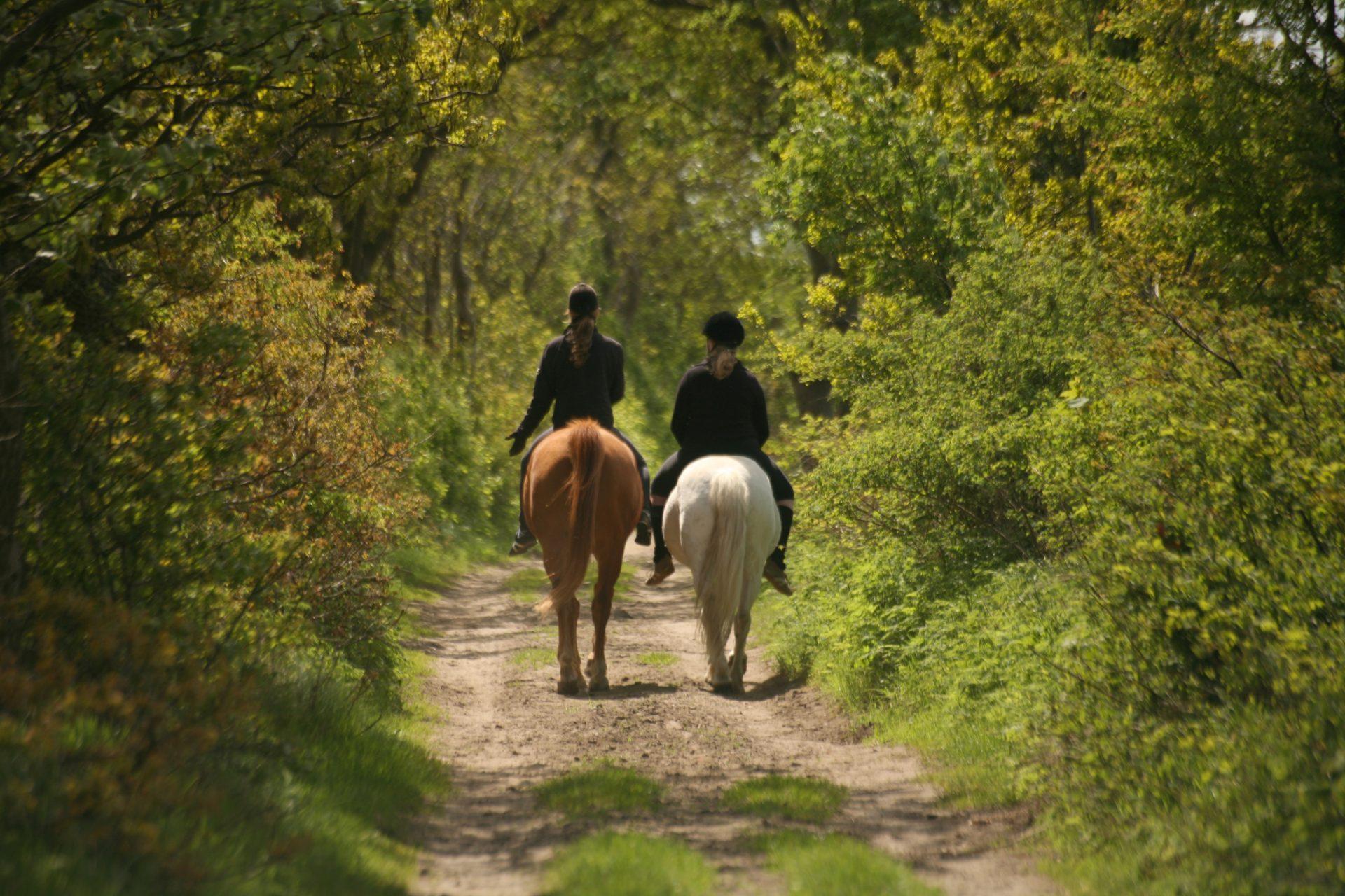 Zwei Mädchen auf Pferden auf einem idyllischen Feldweg